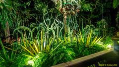 Atlanta, GA: Chihuly glass blown sculptures at the Botanical Gardens (nabobswims) Tags: atlanta botanicalgarden dalechihuly ga glass hdr highdynamicrange lightroom nabob nabobswims photomatix sculpture sonya6000 us unitedstates georgia selp1650