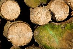 ckuchem-7146 (christine_kuchem) Tags: abholzung baum baumstmme bume einschlag fichten holzeinschlag holzwirtschaft wald waldwirtschaft