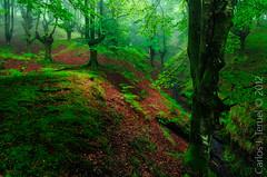 The magical forest. (Carlos J. Teruel) Tags: viaje musgo verde nikon tokina niebla paisvasco d300 filtros hayedos xaviersam carlosjteruel polarizadorlee105