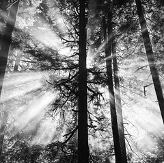 Camp Fires and Morning Light (Aaron Bieleck) Tags: morning camping light blackandwhite bw 6x6 film oregon analog square nw smoke 120film pacificnorthwest throughthetrees lightrays hasselblad500cm mthoodnationalforest