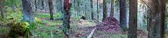 Tikkamki Brenizer (L.Mikonranta) Tags: panorama nature forest canon finland eos 85mm 5d usm f18 ef mkii markii brenizer 8518 canonef85mmf18usm tikkamki canoneos5dmarkii 5d2 5dii 5dmkii canoneos5dmkii 5dmk2 5dmark2 canoneos5dmark2