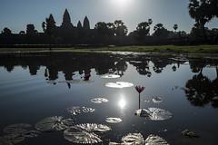 Sunrise over Angkor Wat, Cambodia (Thainlin Tay) Tags: morning lake flower reflection water sunrise cambodia lily pad angkor wat