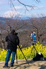 DSC_4478.jpg (d3_plus) Tags: street flower nature japan trekking walking tokyo scenery fuji hiking fine sightseeing sunny daily bloom  fujisan    kanagawa     dailyphoto  mtfuji j4 thesedays  ninomiya rapeblossom          nikon1  adumayamapark 1nikkorvr10100mmf456 1 nikon1j4