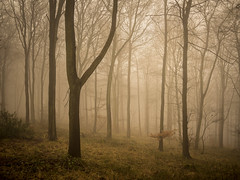 Silently Waiting (Damian_Ward) Tags: wood morning trees mist misty fog forest
