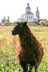 A sheep posing to my camera, Suzdal, Russia (inchiki tour) Tags: travel church fairytale landscape photo europe sheep russia pastoral orthodox  suzdal 2014 goldenring