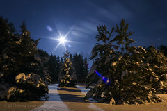 One Winter Night (maryanne.pfitz) Tags: winter moon snow wisconsin night clouds landscape nightscape moonlight pinetrees tomahawk lincolncounty maryannepfitzinger map139525