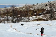 téli séta / winter walk (debreczeniemoke) Tags: winter snow gutin hó tél canonpowershotsx20is gutinhegység munţiigutâi munţiigutin gutinmountains