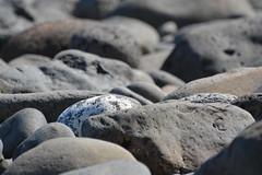DSC_0065 (aliciadesign) Tags: surf whales bigisland honolii