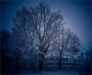 Werdinsel WinterNacht