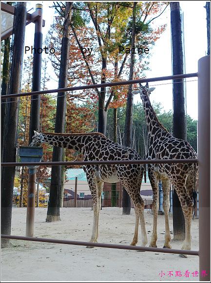 釜山動物園 (14).JPG