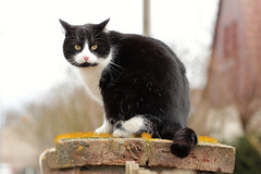 molli (nettisrb) Tags: pet cat feline chat bokeh katze gatti kot kedi