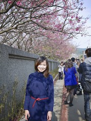 (Kent-Chen) Tags:  sakura cherryblossoms  yangmingshan cerasus   gf1 lumixg20f17