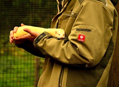 Zoo Grmitz,Ostsee (Germany) (jens_helmecke) Tags: park sea nature animal germany deutschland zoo natur baltic jens ostsee schleswigholstein kurort frettchen grmitz helmecke