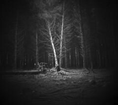 Fallen Tree (sparksy2k14) Tags: blackandwhite tree dartmoor