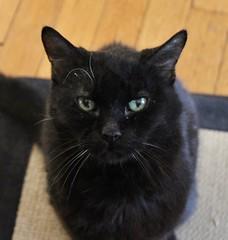 (spotboslow) Tags: cat hextall watertown massachusetts