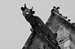 Gargoyle (Parkinsonian Sprayer) Tags: gargoyle gargouille gotic gothic barri barcelone barcelona catedral cathedral