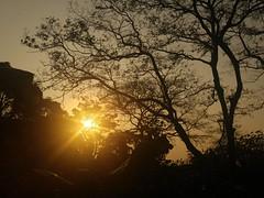 20160220_172301 (SK2 416) Tags:   mobilecamera lg tree hongkong  sunset eve evening