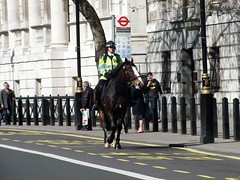 Metropolitan Police Service - Mounted (Waterford_Man) Tags: mps metropolitanpoliceservice whitehall london mounted