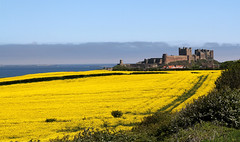 Bamburgh Castle (Gay Biddlecombe) Tags: sky castle field yellow northumberland bamburgh rapeseed