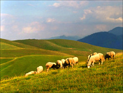 Shepherd on leave (Katarina 2353) Tags: landscape serbia srbija europe zlatibor mountain valley katarina2353 katarinastefanovic film nikon