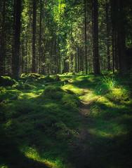 Green dream (L.Matero) Tags: road trees tree green beautiful fairytale forest canon suomi finland landscape woods path dream f4 6d 1635 muurame
