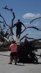 The Main Attraction, Jekyll Island, GA - IMGP4665 (catchesthelight) Tags: driftwoodbeach georgiasmostcompellingbeaches jekyllislandga barrierisland oneofthemostinterestingshorelines whitesand oaktrees driftwood gnarly naturalgraveyard preservation beauty light shadow texture
