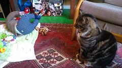 He's on my rug (kayatkinson-simson) Tags: darby kane tabbycat 6monthsold babytoys catandbaby