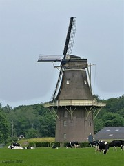 Typical Dutch  - Hollands plaatje - De Vilsterse Molen (Cajaflez) Tags: windmill nederland thenetherlands molen flourmill stellingmolen korenmolen vilsteren achtkantig