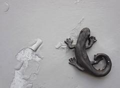 (C. Neil Scott) Tags: columbiasc southcarolina thebigapple synagogue houseofpeacesynagogue salamander