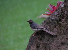 Life in botanic garden (Igor Sorokin) Tags: kauai island hawaii us usa nature bird rock flower closeup dslr nikon d5300 nikkor 18300 telephoto zoom travel