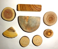 Jewelry findings supplies crafts, natural wooden slices mix (john bonham2) Tags: wood wooden mix natural parts jewelry supplies making slices findings jewelrysupplies