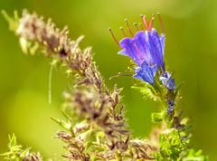 A flower (memfisnet) Tags: flower macro nature green olympus olympusem5 outdoor depthoffield