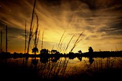 Shadow of nature (Jochem.Herremans) Tags: shadow sunset kalmthout heide nature kalmthoutseheide star stars reflection water river