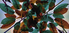 reunion (ojoadicto) Tags: hojas leaves digitalmanipulation manipulaciondefotos calida nature naturaleza