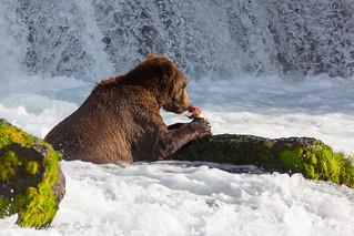 Quick bear brunch at Brooks