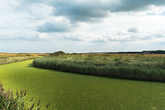 How green the river flows... (AJFpicturestore) Tags: greenriver algae norfolk