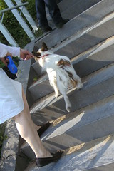 Lige22042011 039 (Rumskedi) Tags: viacrucis monde chien europa europe rollei belgi belgique belgien lige lige22042011