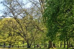 Bad Homburg (tina djebel) Tags: dslr badhomburg stadtpark park nikon d7000 hessen deutschland natur baum bume tree trees