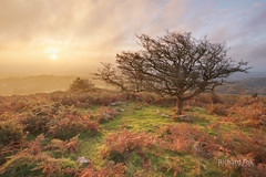 Burning Light (http://www.richardfoxphotography.com) Tags: haytor dartmoor dartmoornationalpark devon sunrise mist tree