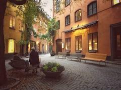 Hst i Gamla Stan (ulricaloeb) Tags: stockholm gamlastan fs161023 tredjedelsregeln fotosondag