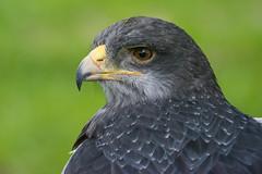 _ATI4905 (Aitzol Arruabarrena) Tags: cabarceno d800 tokina 300 animals animaliak