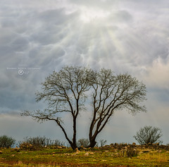 Beauty of Nature (Mohammed H. Designer) Tags: nature nikon natural sun landscapes sunset clouds cloudysky landscape wallpaper leaf tree trees autumn sky sunshine