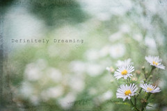 Dreamy Daisies {Textured} (DefinitelyDreaming) Tags: helios442 textures 2lilowls flowers floral daisies dreamy outdoors printshop etsy etsyshop
