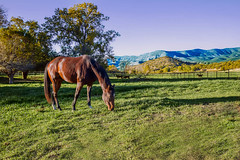Horse in Bent, NM (KarinaSchuh) Tags: bent cities horses landscape newmexico ranch travel places running