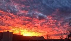 Insomnia bears sunrise gifts (quietred13) Tags: shine morning sunrise