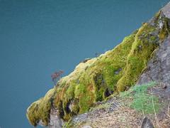 Cougar Moss (Sotosoroto) Tags: dayhike hiking cougarhotsprings oregon cougarreservoir lake