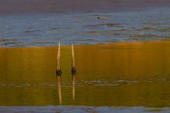 Golden Stakes (SaunTek) Tags: sunrise water sticks golden