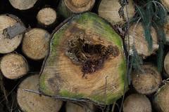 ckuchem-7079 (christine_kuchem) Tags: abholzung baum baumstmme bume einschlag fichten holzeinschlag holzwirtschaft wald waldwirtschaft
