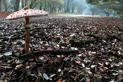 fg (RiccardoAngelillis) Tags: autumn red brown cold green mushroom wet forest mushrooms woods foggy fungus 100d canon100dcanon