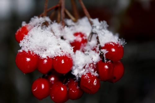 "Im Winterwald mit Schnee 2015 • <a style=""font-size:0.8em;"" href=""http://www.flickr.com/photos/69570948@N04/15708047313/"" target=""_blank"">View on Flickr</a>"